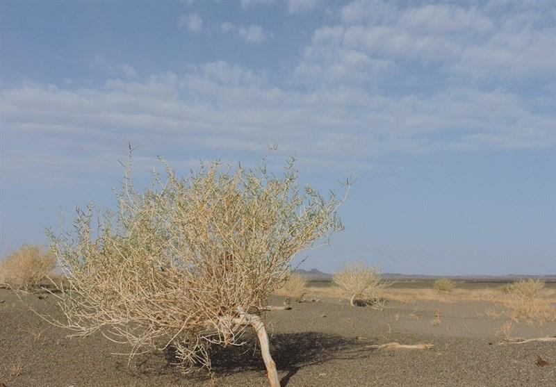 کاهش تخریب پوشش گیاهی در دستور کار منابع طبیعی استان سمنان قرار دارد