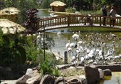 باغ پرندگان.1