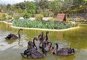 باغ پرندگان قم در قرنطینه کامل است