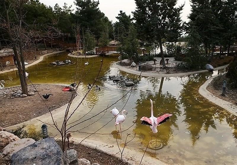 باغ پرندگان در پارک جنگلی بیرجند احداث میشود