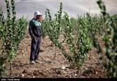 باغ میوه پادگان آموزشی تنگه کنشت در کرمانشاه