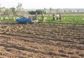 4.5 میلیون تن محصولات کشاورزی در استان اردبیل تولید میشود
