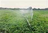 سهم اشتغال بخش کشاورزی کهگیلویه و بویراحمد به 21 درصد افزایش یافت