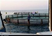 10 هزار تن ماهی پرورشی در استان بوشهر تولید میشود
