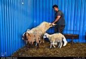 کرمانشاه| آمادگی دروازه کربلا در عید الاضحی و جشن تقرب عاشقان