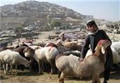ویدیو/عید قربان افغانستانیها از نگاه دوربین خبرنگار تسنیم + فیلم