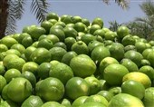 قیمت جدید عمده فروشی انواع میوه/ لیموترش 13 هزار تومان+ جدول