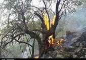 پیش بینی استاندار کهگیلویه و بویراحمد از افزایش آتش سوزی در جنگلها؛ مدیران بهفکر باشید