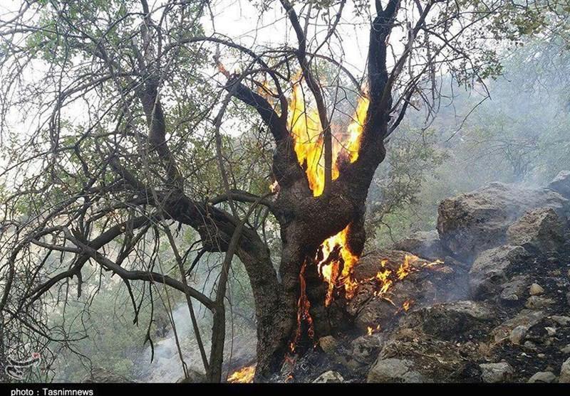 40 هکتار از جنگلهای کهگیلویه و بویراحمد در آتش سوخت