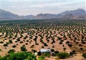 500 هزار هکتار باغ دیم در اراضی شیبدار کشور احداث میشود