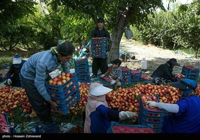 با احداث باغ میوه برای پنجاه کارگر بومی به طور مستقیم و غیر مستقیم اشتغالزایی ایجاد شده است.