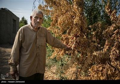 """حاج علی اکبر صیدوند که 3 سال کشاورز نمونه منطقه اسلامشهر بوده به همراه پنج پسرش چند دهه است مشغول به کار کشاورز می باشند و چند سالی است که بخش وسیعی از زمین های خود را به باغ میوه تبدیل کرده می گوید: """" شرکت آب منطقه ای تهران دیگر قرار نیست مثل گذشته حقابه کشاورزانی را که در کنار کانل آب محمدیه ( در قسمت بالا دست) قرار دارند را بدهد و کشاورزی و باغات منطقه در آستانه نابودی قرار دارند"""""""