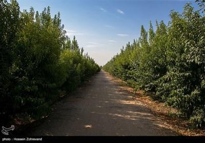 خشکسالی در انتظار باغ میوه