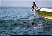 جزیره هنگام به مرکز گردشگری حلال ایران تبدیل میشود