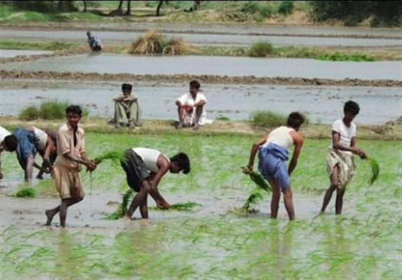 نکاسی کے پانی سے فصل اگانے والے ممالک میں پاکستان سرِ فہرست