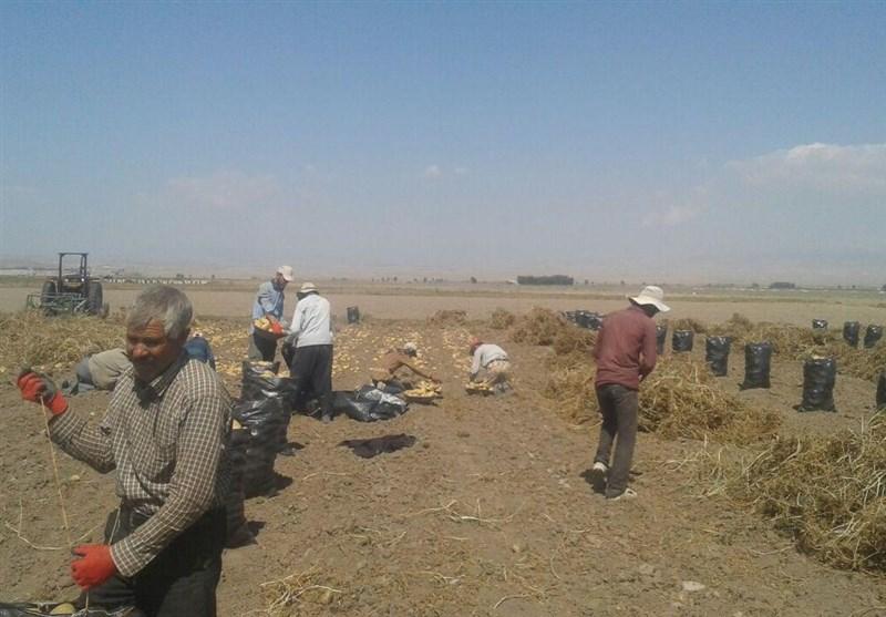 کشاورزان اردبیلی