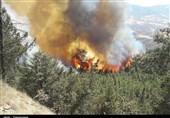 گلستان پاکسازی جنگل مجازات فردی که درختان جنگلی را آتش میزد