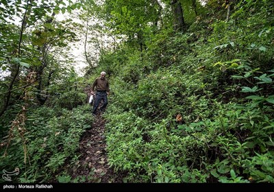 داداش هاشمی 52 ساله معلم مدرسه شهید اشرفی اصفهانی روستای مظلم کم شهرستان تالش در اولین روز از سال تحصیلی به سمت مدرسه حرکت میکند. او در روزهایی که هوا مناسب است یک ساعت با موتور تا جایی که امکانش وجود داشته باشد رانندگی میکند سپس باقی مسیر راه از میان جنگل و کوه در حدود نیم ساعت پیاده روی میکند تا به مدرسه برسد