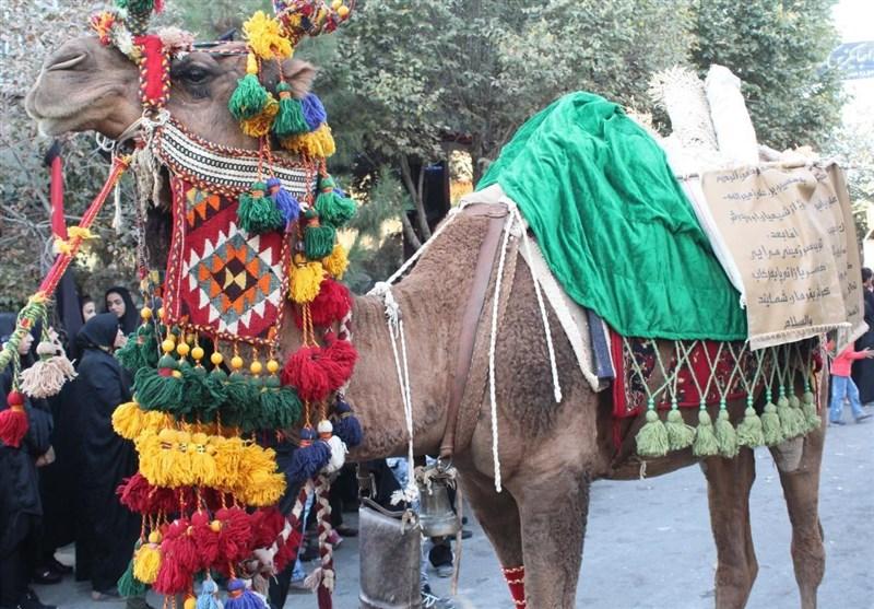 شبه کاروان ورود به کربلا در نوشآباد آران و بیدگل بازسازی شد+تصاویر