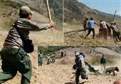 کشتار توله خرس و جابجایی در محیط زیست گلستان