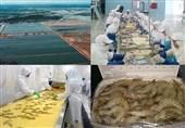 3900 تن ظرفیت جدید در صنعت پرورش میگو در قشم ایجاد شد
