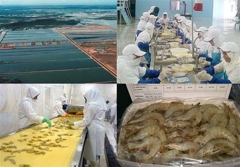بوشهر| 1.5 میلیارد قطعه بچه میگو در استان بوشهر تولید میشود