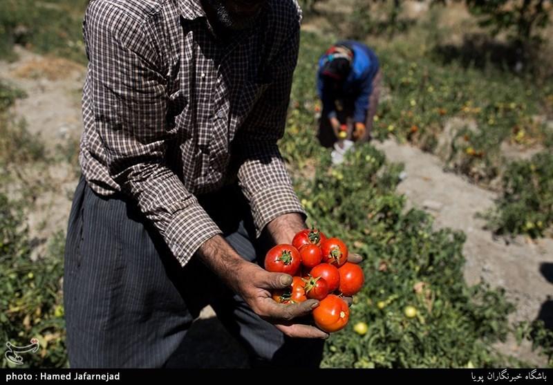 1500 میلیارد تومان تسهیلات کشاورزی در سال جاری پرداخت شد