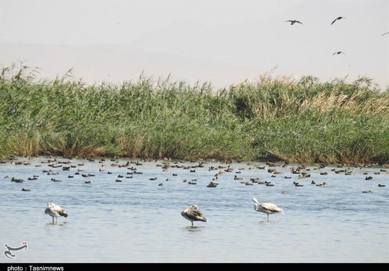 Meighan Wetland: A Diamond in The Heart of Desert