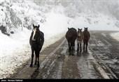 آخرین جزئیات عملیات برف و کولاک در کشور