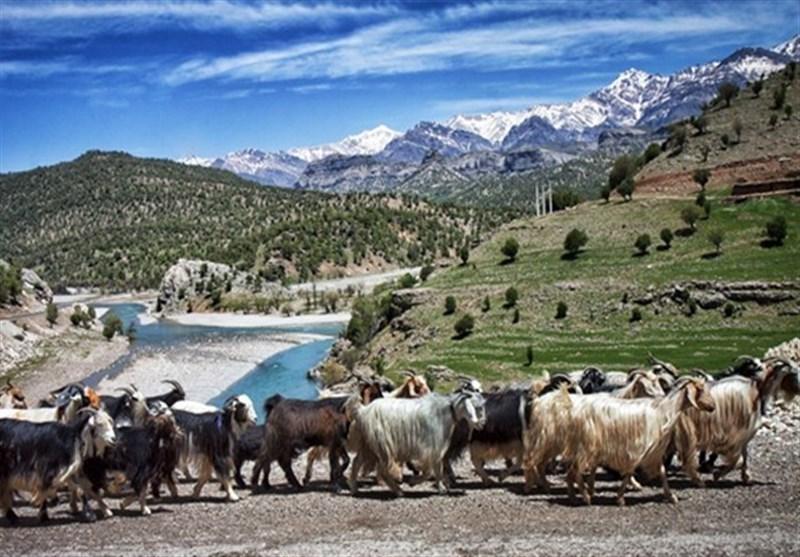 90 درصد عشایر استان مرکزی در ساوه و زرندیه سکونت دارند