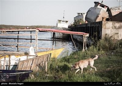 پل چوبی بندر کیاشهر در وضعیت هشدار