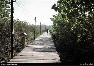 مردم زیادی از این پل زیبا و ساحل آن یعنی ساحل کیا شهردیدن می کنند
