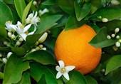 ما علاقة البرتقال بضعف البصر؟