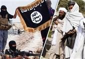 اتحاد با داعش هرگز امکانپذیر نیست/حکم رهبر طالبان مبارزه با داعش است