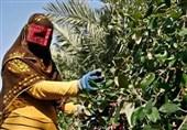 حمایت از صندوق خرد زنان روستایی هرمزگان از افزایش مهاجرت جلوگیری میکند