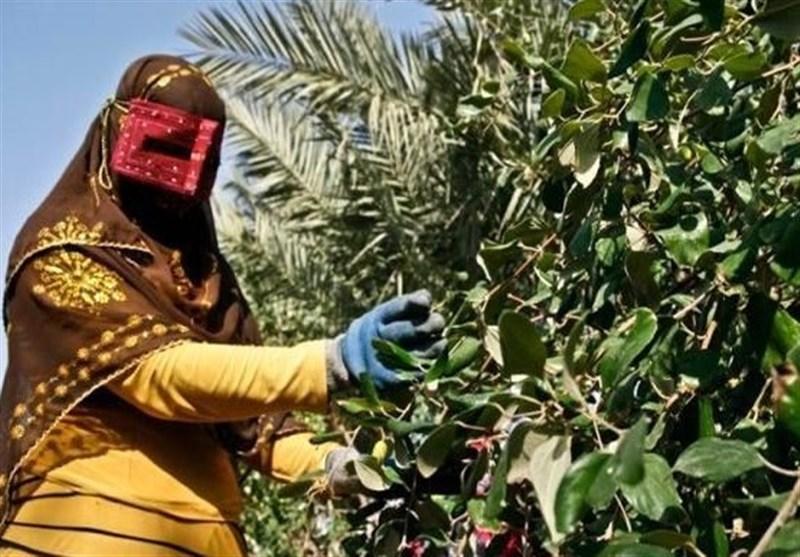 صندوق حمایت از زنان روستایی