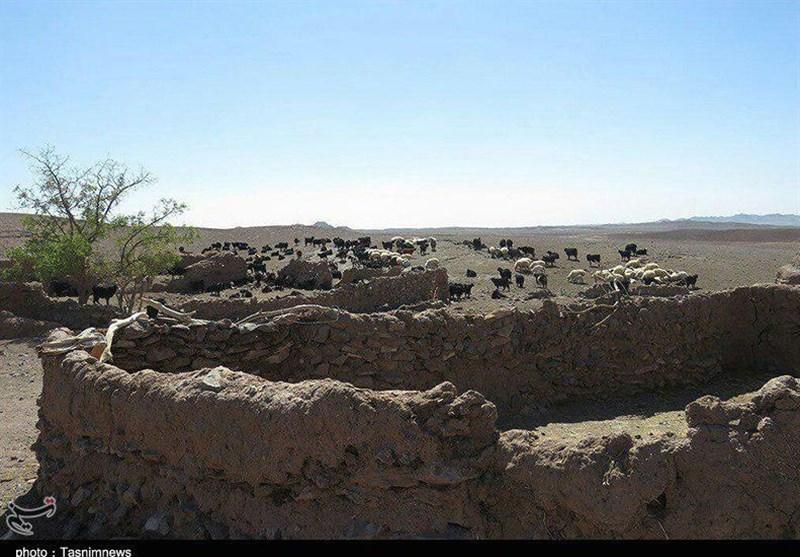 خشکسالیهای 18 ساله گریبانگیر عشایر منطقه خوسف + تصویر