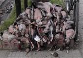 آمادگی دادستانی کل برای ورود به معضل صید و عرضه غیرقانونی پرندگان