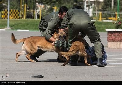 عملیات واحد سگهای یگان ویژه انتظامی (سپکا)