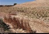 پاییز خشک در جنوب ایران/ حاشیه خلیج فارس بدون یک قطره باران