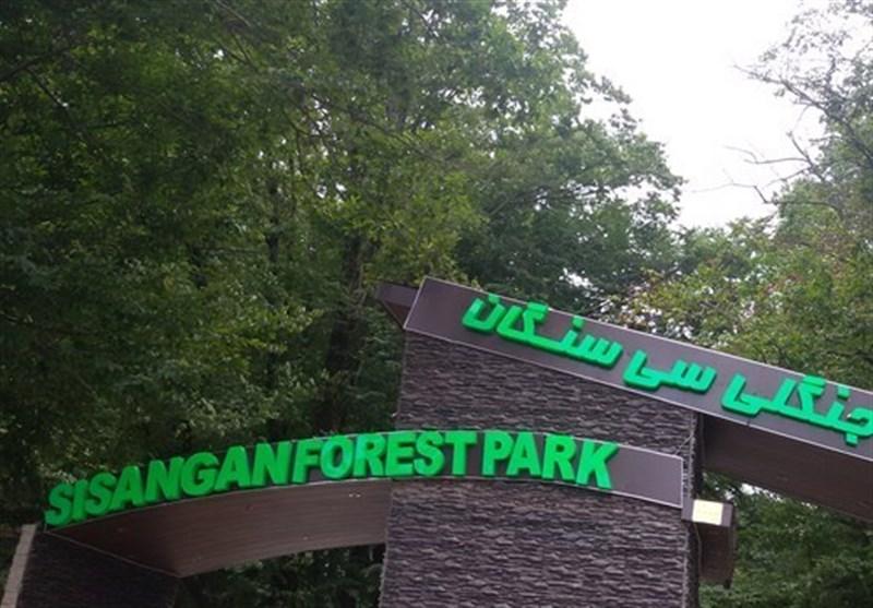 Iran's Sisangan Forest Park, Vivid, Dynamic