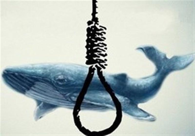 نهنگ آبی در الجزایر هم قربانی گرفت