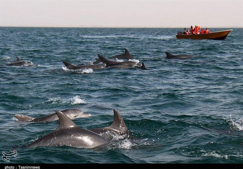 جبیر، دلفین و آکواریوم؛ زیباییهای جزیره هنگام در دل خلیج فارس + فیلم
