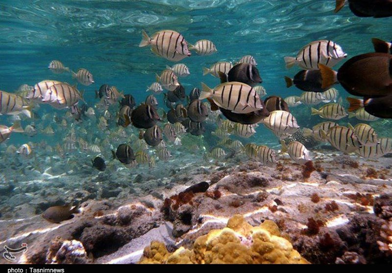 در اطراف هنگام به راحتی میتوان آبزیان را بدون ابزار مشاهده مصنوعی دراعماق آب به تماشا نشست