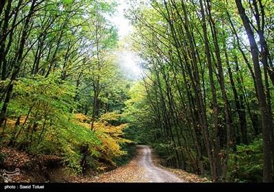 جنگل دشت شاد