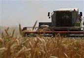 پوتین: روسیه مواد غذایی تراریخته را نه تولید و نه مصرف میکند
