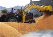 2.2 میلیون هکتار به سطح زیر کشت گندم مکانیزه اضافه شد