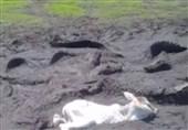 لحظه باورنکردنی نجات گوساله از دست کروکودیلها+فیلم