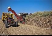 چرا تولید شکر در خوزستان کاهش یافت؟