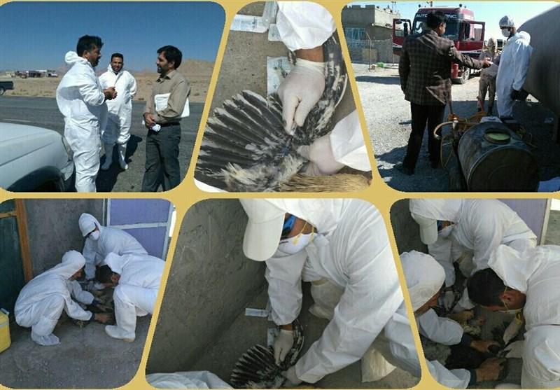 دستور کنترل آنفلوانزای فوق حاد پرندگان پرندگان در 31 استان صادر شد